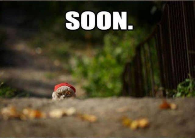 Cat_soon.jpg