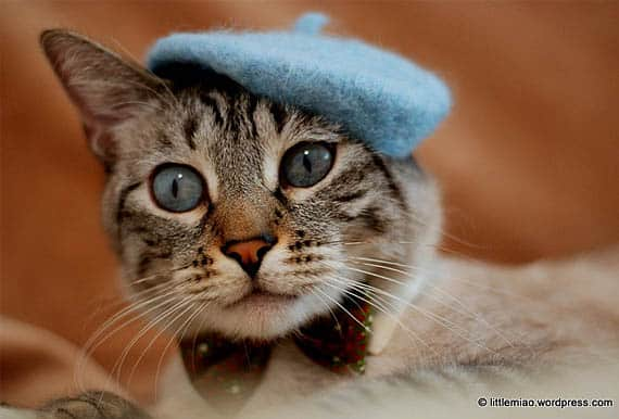 cat french berret