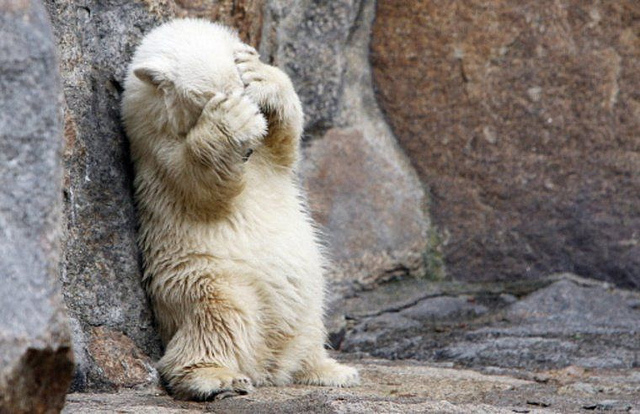 Bear hiding his eyes - feeling shy? sorry?
