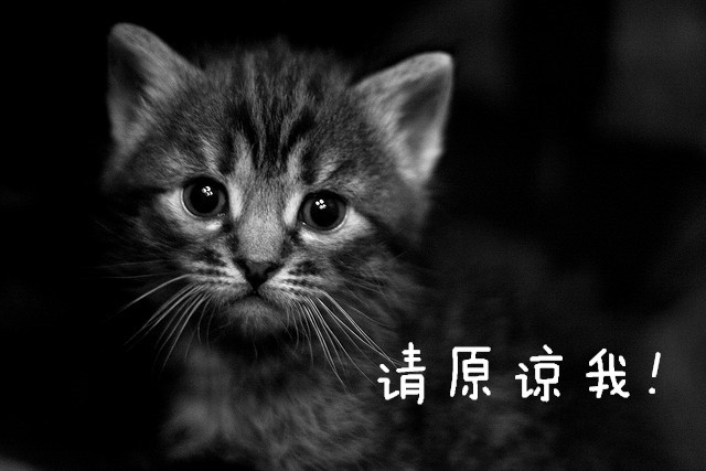 Sad kitten asking for forgiveness in Chinese