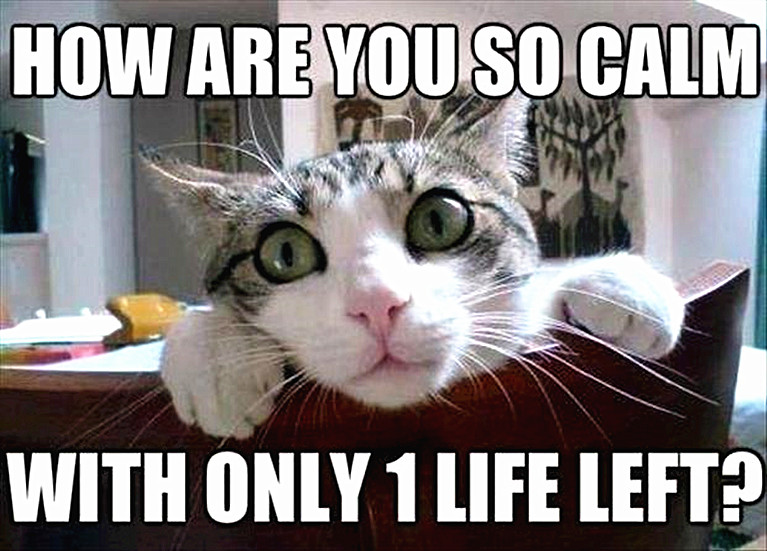 Cat meme with a cute cat saying you can't be calm with only one life let