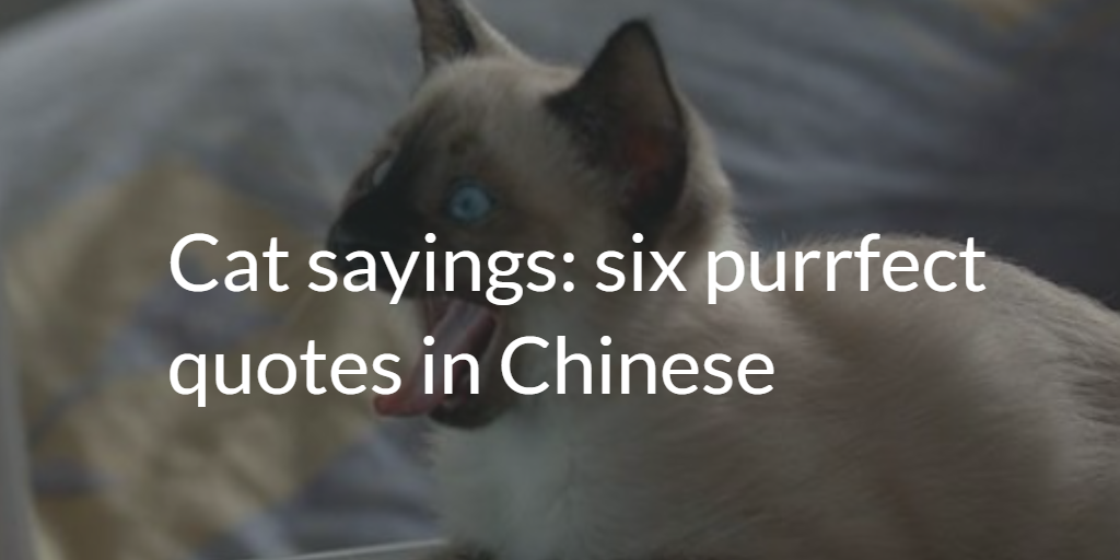 Cat Sayings 6 Purrfect Quotes
