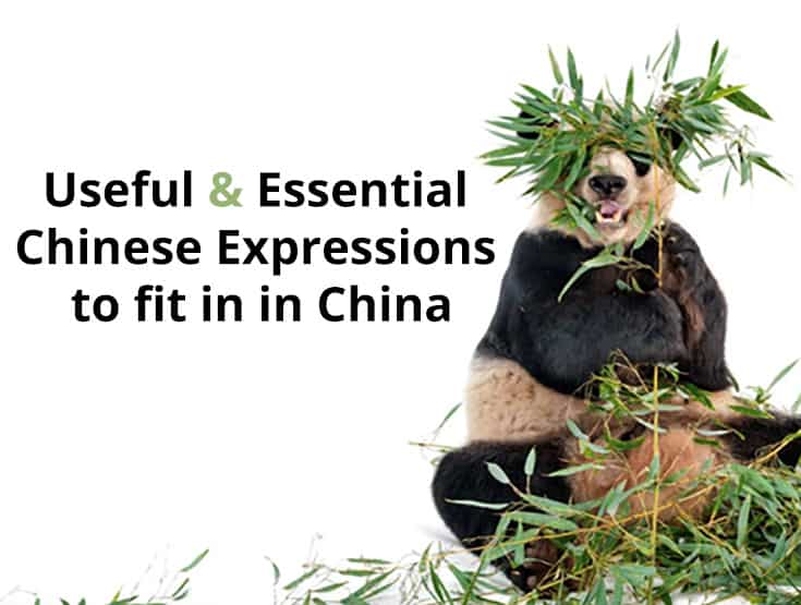 Useful & Essential Chinese Expressions to fit in in China
