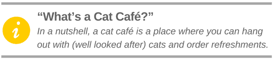 What is a cat café?
