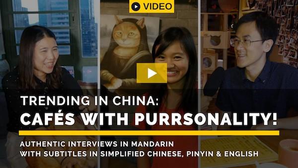 Guest post: Trending in China: cat cafés
